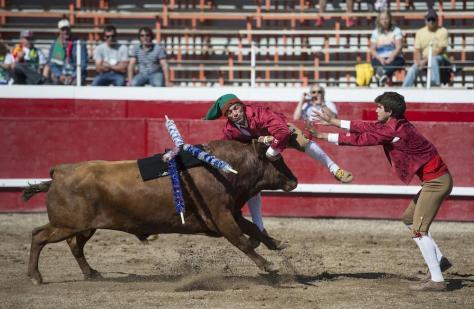 touradas-portuguesa-no-canada-onde-os-touros-nao-sangram-905-1467667124