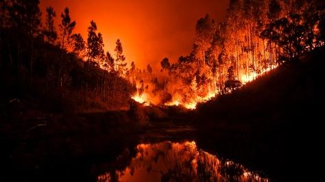 Burning eucalyptus view portugal